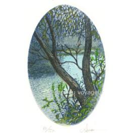 Ruisseau et arbre