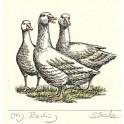Les Oies